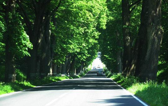 """начали пересекать известные в этой местности """"грунды"""" овраги пересекаемые дорогами. Сейчас дорога идёт вниз на дно оврага,"""