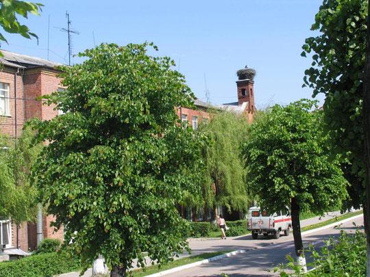 Знаменит Мамоново и городскими аистами,  это гнездо я помню уже лет 30