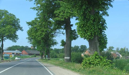 Появляется Бранденбург (Ушаково) видны  остатки орденской кирхи, надо подъехать поближе.