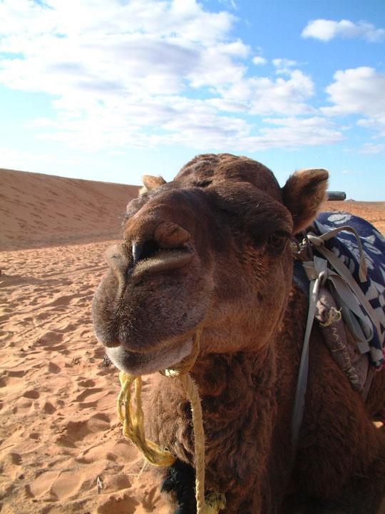 Voor alle reisverslagen van Afrika zie hoofdmenu.