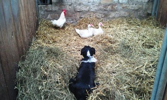 Bei Luzie gehen die Tiere ein und aus !!