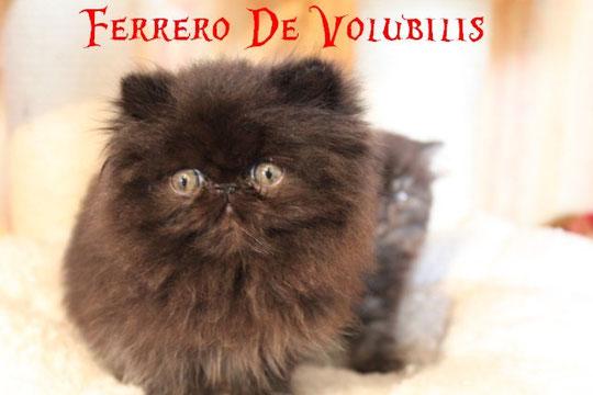 + de photos de Ferrero cliquez sur sa photo