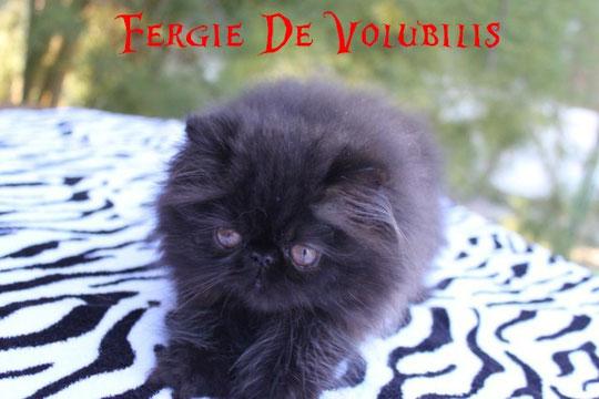 + de photos de Fergie cliquez sur sa photo