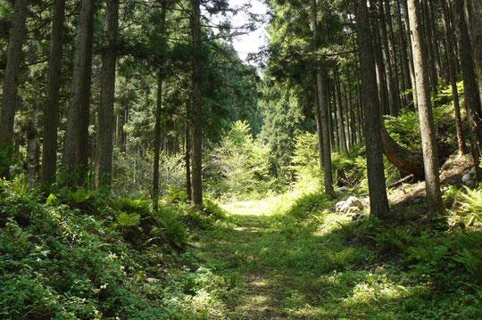 林道の入り口