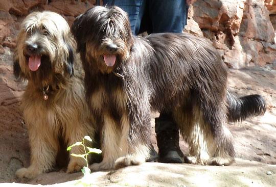 Ben und Pipiola