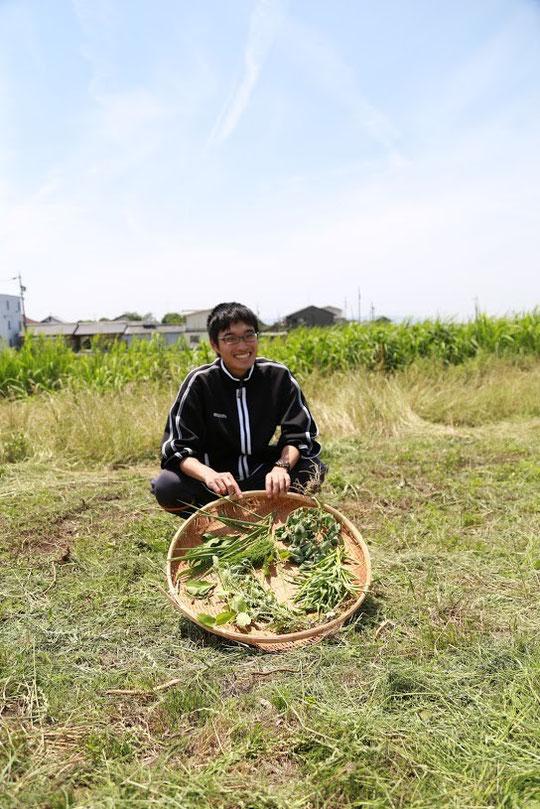 私たちの祖先は古来、野山の植物を食べて生きてきました。