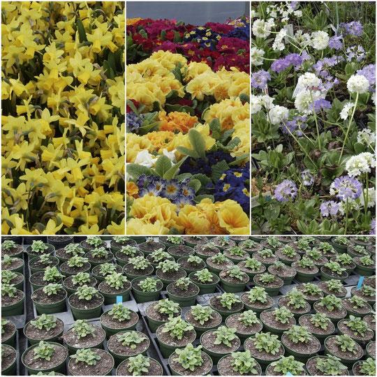 Besuchen Sie unser Blumenparadies