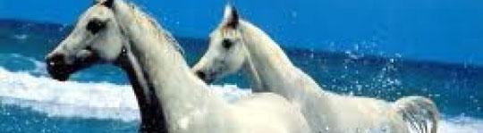 The Horse A et M !