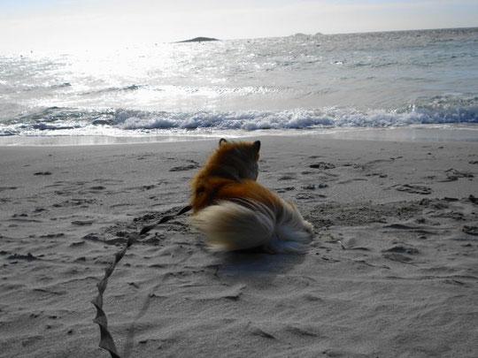 Tuvra und das Meer