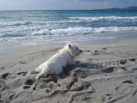 Bobby am Strand in Korsika