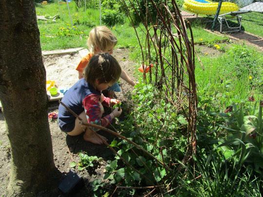 Gartenideen für Kinder: ein Kinderbeet