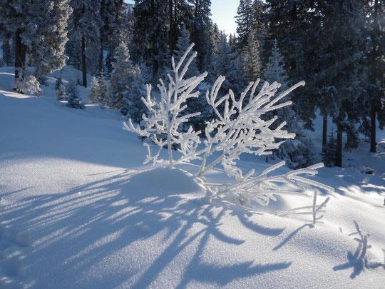 Winterlandschaft am Schneeschuhpfad