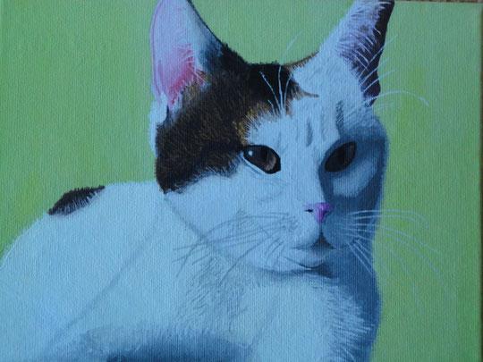 Tiffy - Meine Katze