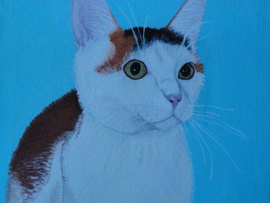 Minka - Meine Katze