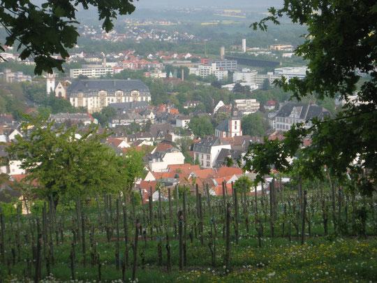 Blick vom Johannisberg über die Weinberge auf die Dächer der Altstadt von Bad Nauheim
