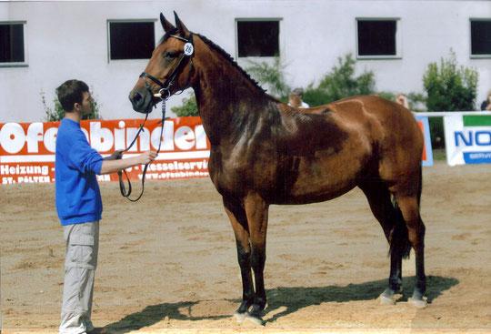 """Ich bei meiner ersten Stutenpräsentation 2005( Stute """" Bakira"""" v. Paquirri)"""