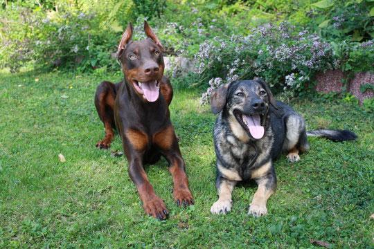 Cosmo mit Stella..unserer Nachbarin