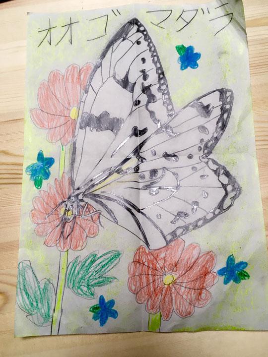 体験レッスン 蝶の絵