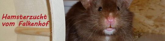 Hamsterzucht vom Falkenhof