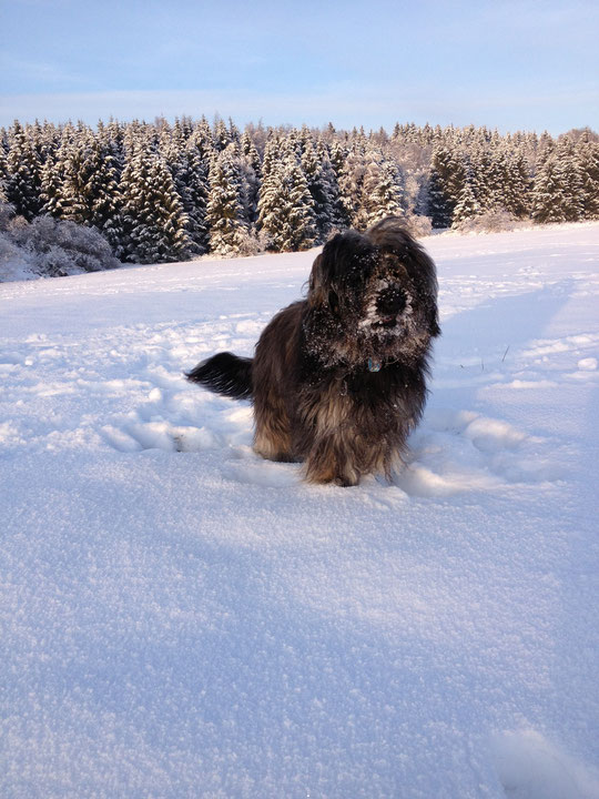 jede Menge Schnee...