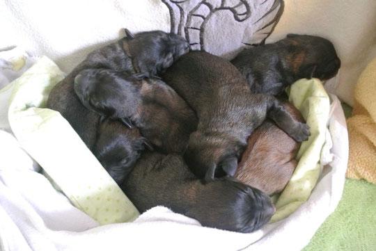 5 Mädels und 2 Jungs mit Quini am 23.06.2014