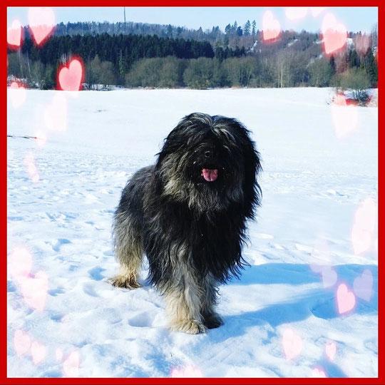 Valentinstags-Spaziergang bei bestem Gos-Wetter, gefrorener Schnee und Sonnenschein.