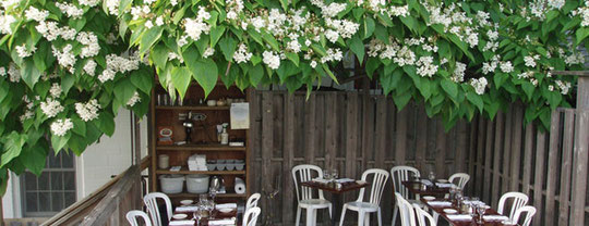 The Upper Deck with the Catawba (Catalpa)  Tree in Full Bloom