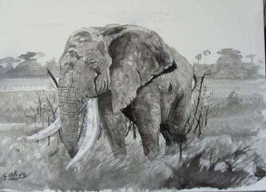 Elefante  BeN