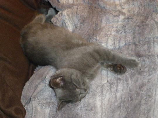 Molli schläft auf der Chouch und ...