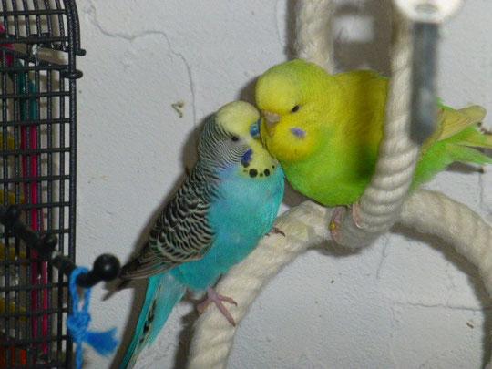 Bibo und Claudia