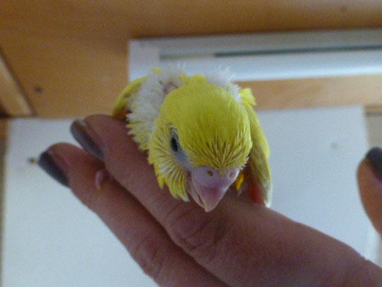 Ein hübsches gelbes Entlein und spielt mit den Fingern. Er will schon jetzt beschäftigt werden
