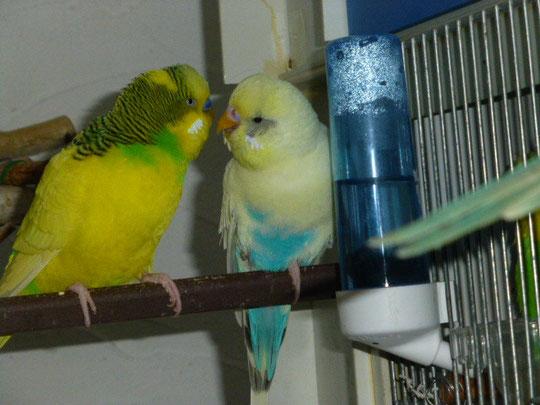 Vinnie und Lilly