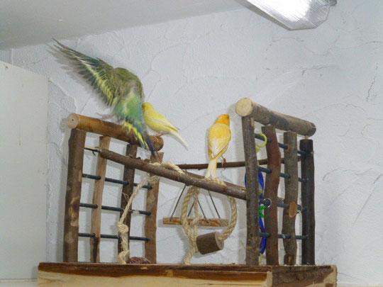 Pepe und Pieps mit klein Smarty der gerade weg fliegt