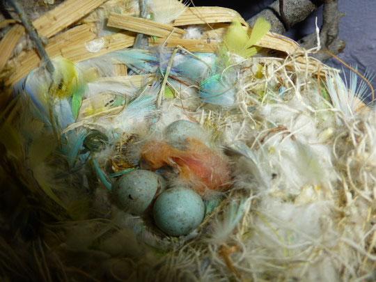 Eingehüllt in Federn das Vogelkind!