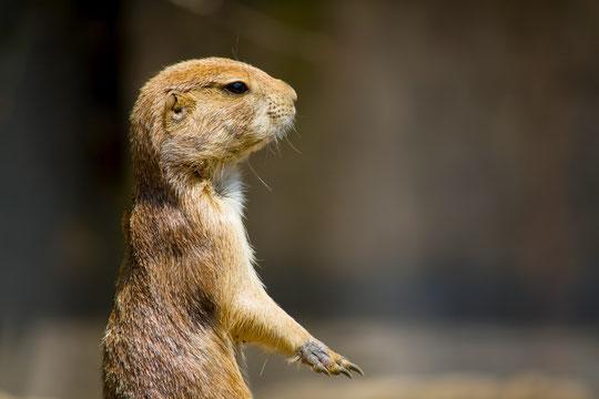 立ったり座る時に腰が痛い奈良県御所市の女性