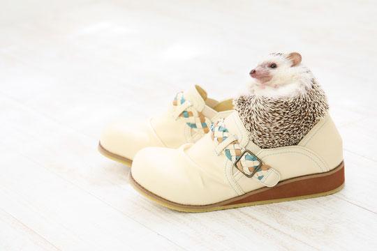 合わない靴で腰椎椎間板ヘルニアが悪化した奈良県大和高田市の女性