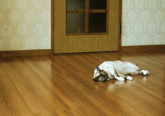 頚椎椎間板ヘルニアで疲れやすい奈良県御所市の女性