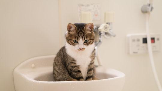頚椎ヘルニアがお風呂で悪化した奈良県大和高田市の男性