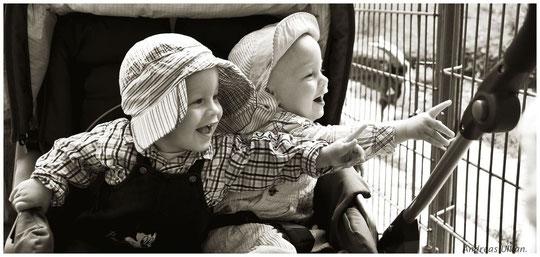 Zwillingsbegeisterung | fotografiert 07-2011