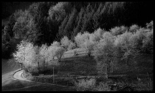 Abendstimmung | fotografiert  04-2010