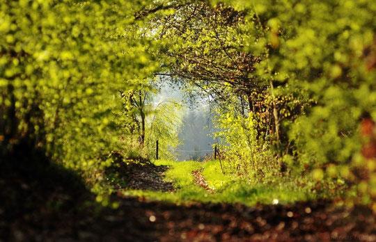 Hohlweg | fotografiert 04-2012