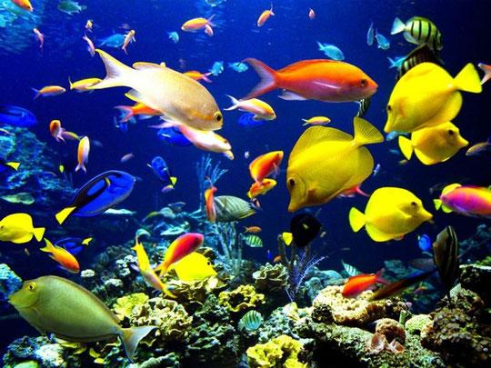 красивые рыбки фото