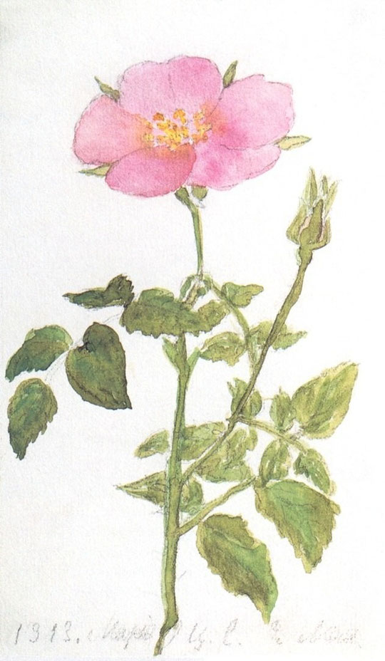Рисунок Вел. Кн. Марии, 1911 г.