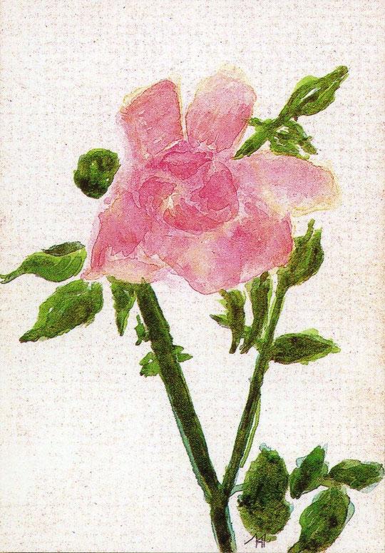 Рисунок Вел.Кн. Ольги. Ветка шиповника. Рисунок на почтовой карточке 1914 г.