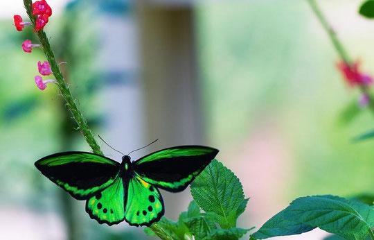 Красивые бабочки фотографии