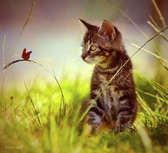 котенок и бабочка