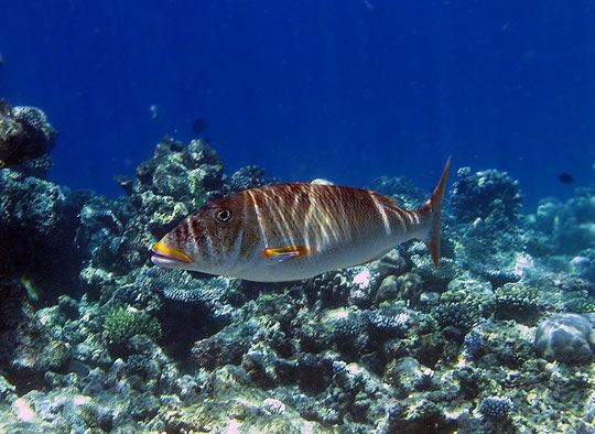 фотографии рыбы скачать бесплатно
