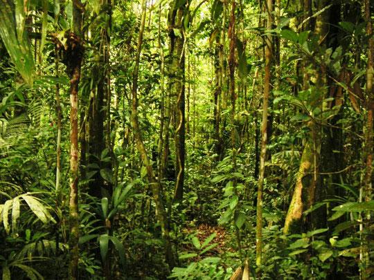 Der Urwald von unten