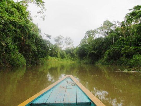 Kleinerer typischer Urwaldfluss