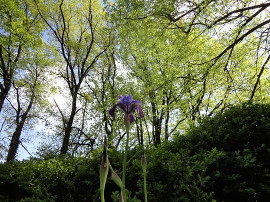 Verticalité de la Nature, Dordogne